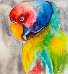 Sketch of the Indian Plum-headed Parakeet