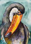 The Toco Toucan