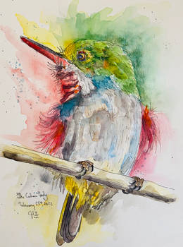 Sketch of a Cuban Tody Songbird