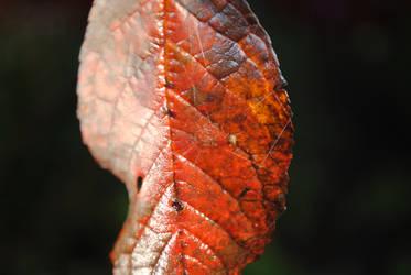 Leaf by EricaJaneLatham