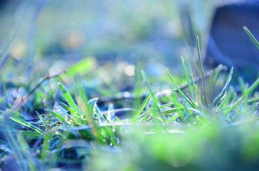 Spring grass by parcour-ub