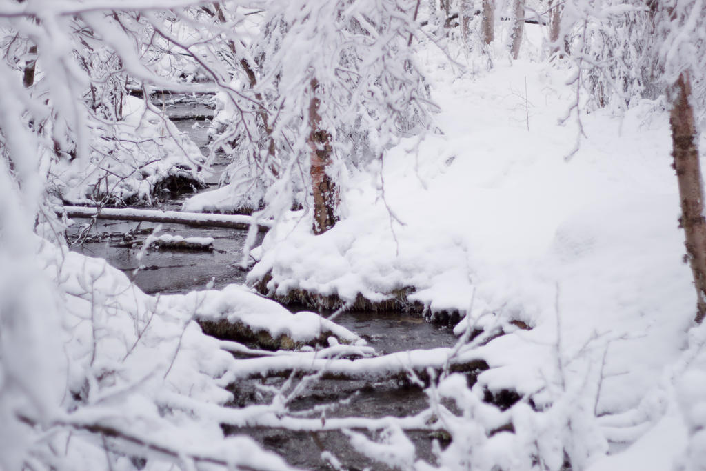 Winter Creek by AlaskaPhotoSports