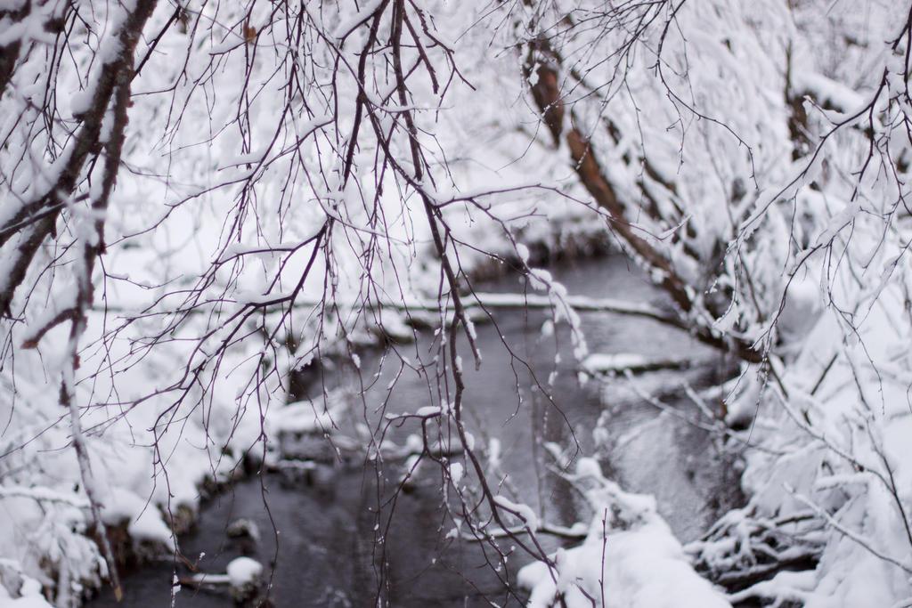 Winter Creek 2 by AlaskaPhotoSports