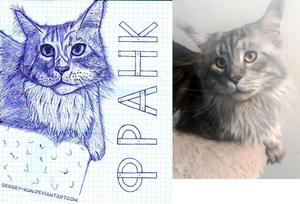 The cat of my friend - Frank by Sergey-Kun