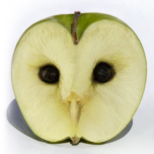 Apple Owl by megaossa