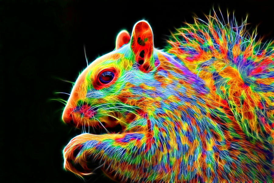 Colorful Squirrel by megaossa on DeviantArt