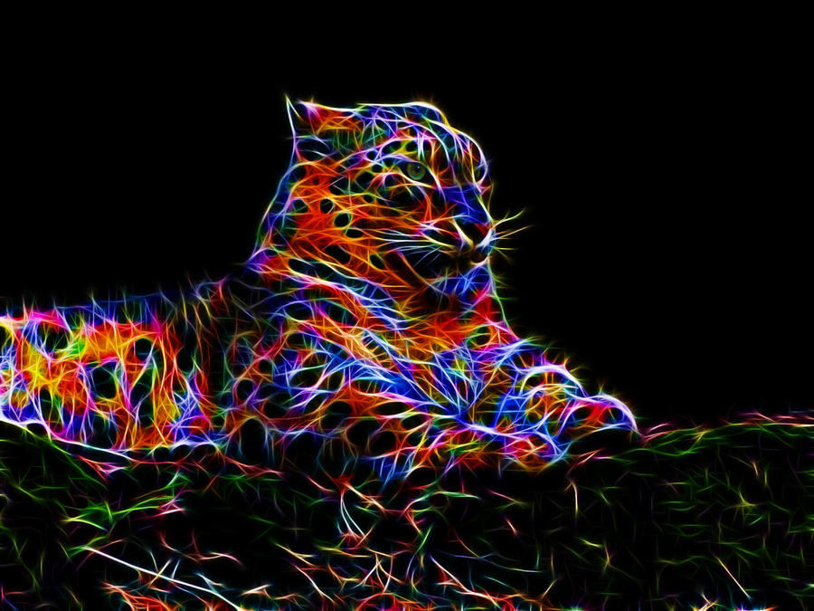 colorful leopard backgrounds artistic - photo #9