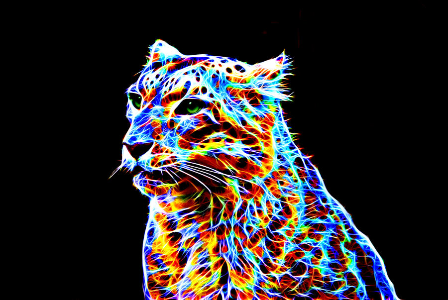 colorful leopard backgrounds artistic - photo #13