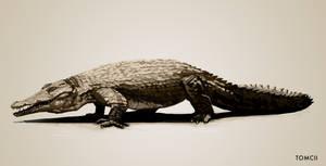 Crocodile by Tom-Cii