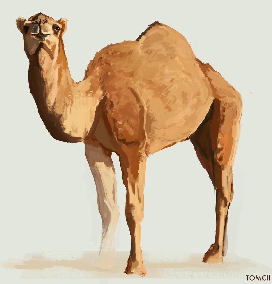 Camel By Tom Cii On Deviantart