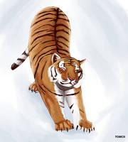 Tiger Streching 2 by Tom-Cii