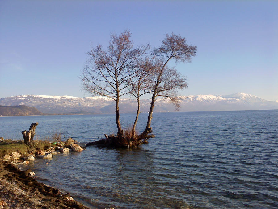 Tree in water by JunkieMKD on DeviantArt