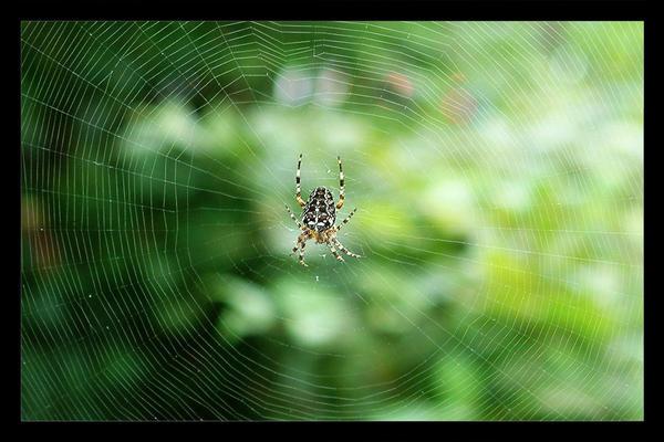Spider Spider... by brokenangel
