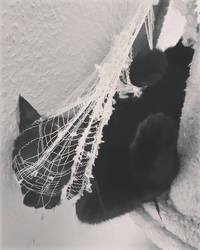 Caught in the Net  by brokenangel
