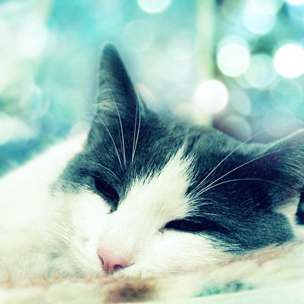 C'est décidé... Dreamy_cat_by_wolf_minori
