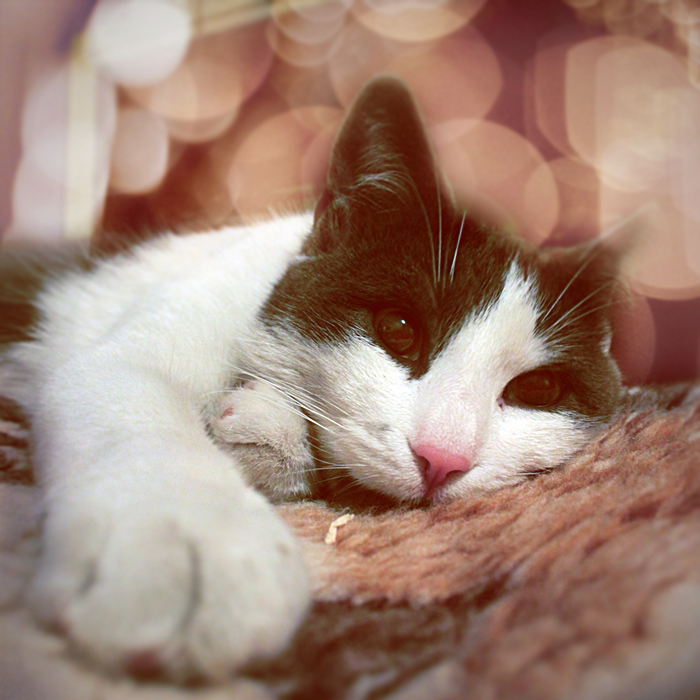 C'est décidé... Dreamy_cat_II_by_wolf_minori