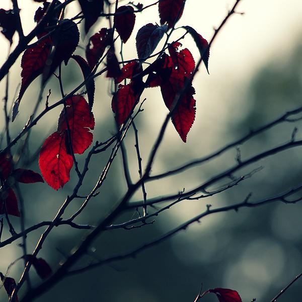 Jesen - Page 2 Autumn__s_coming_by_wolf_minori-d2z4d5b