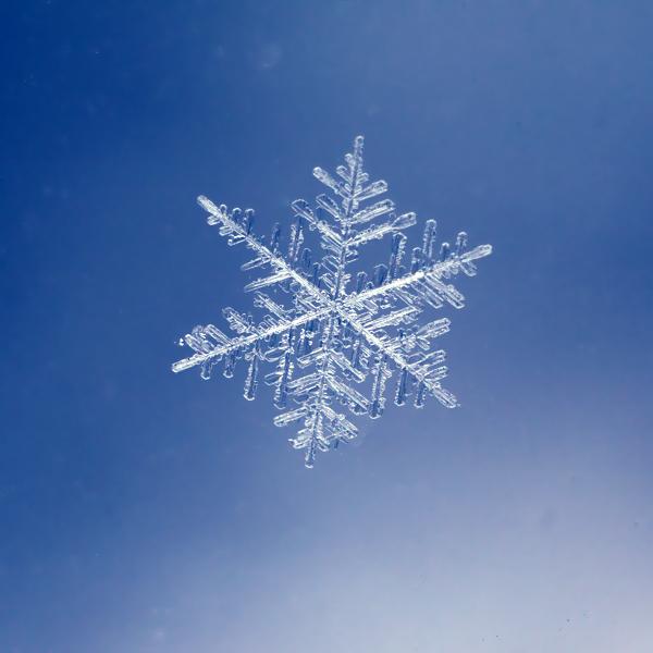 the snowflake by wolf-minori