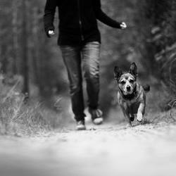 we run together by wolf-minori