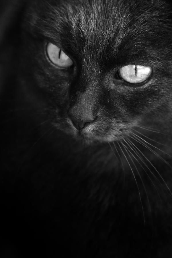 black as moonless night by wolf-minori