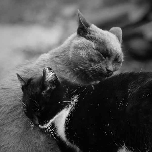 Purrrre Love by wolf-minori