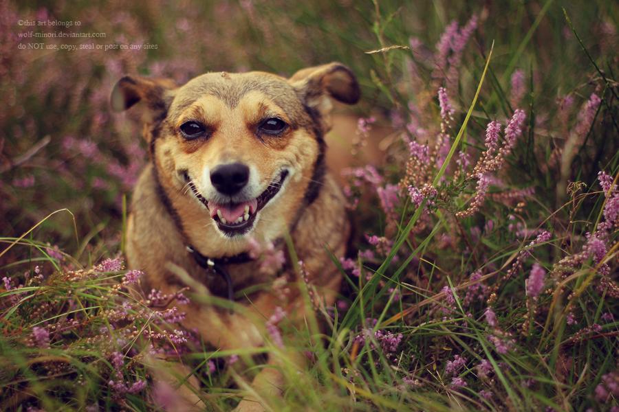 Heathery smile by wolf-minori