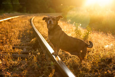 Little railway traveler by wolf-minori