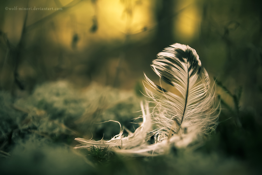 Dream remains by wolf-minori