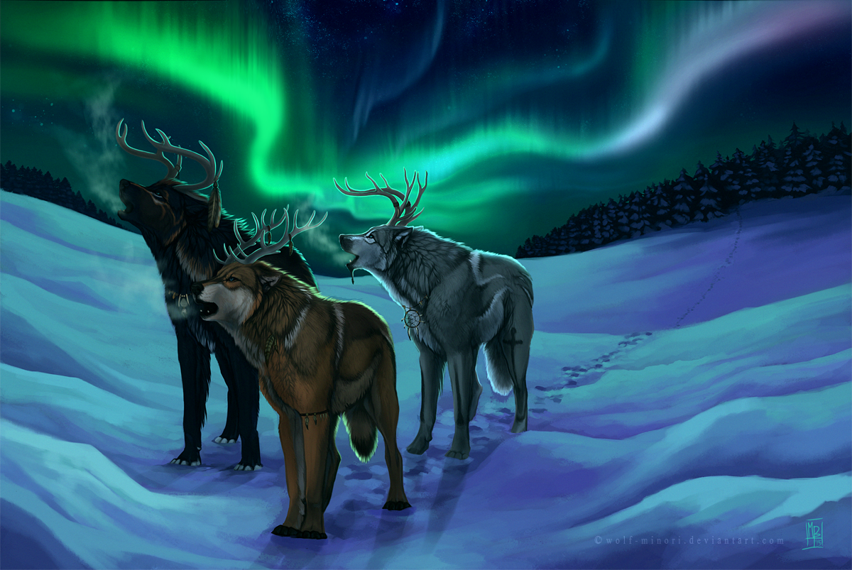 real northern lights wolf - photo #18