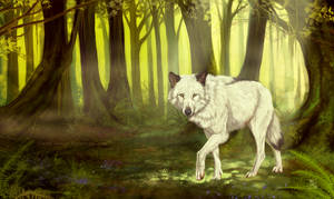 Enchanted woods by wolf-minori