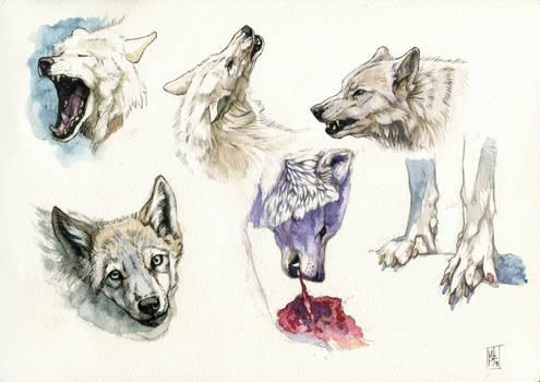 Wolves doodles
