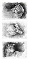 Feeling gray by wolf-minori