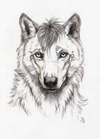 Akasora by wolf-minori