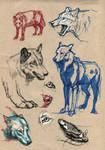 Wolf study II