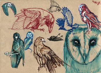Birds doodles by wolf-minori