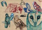 Birds doodles