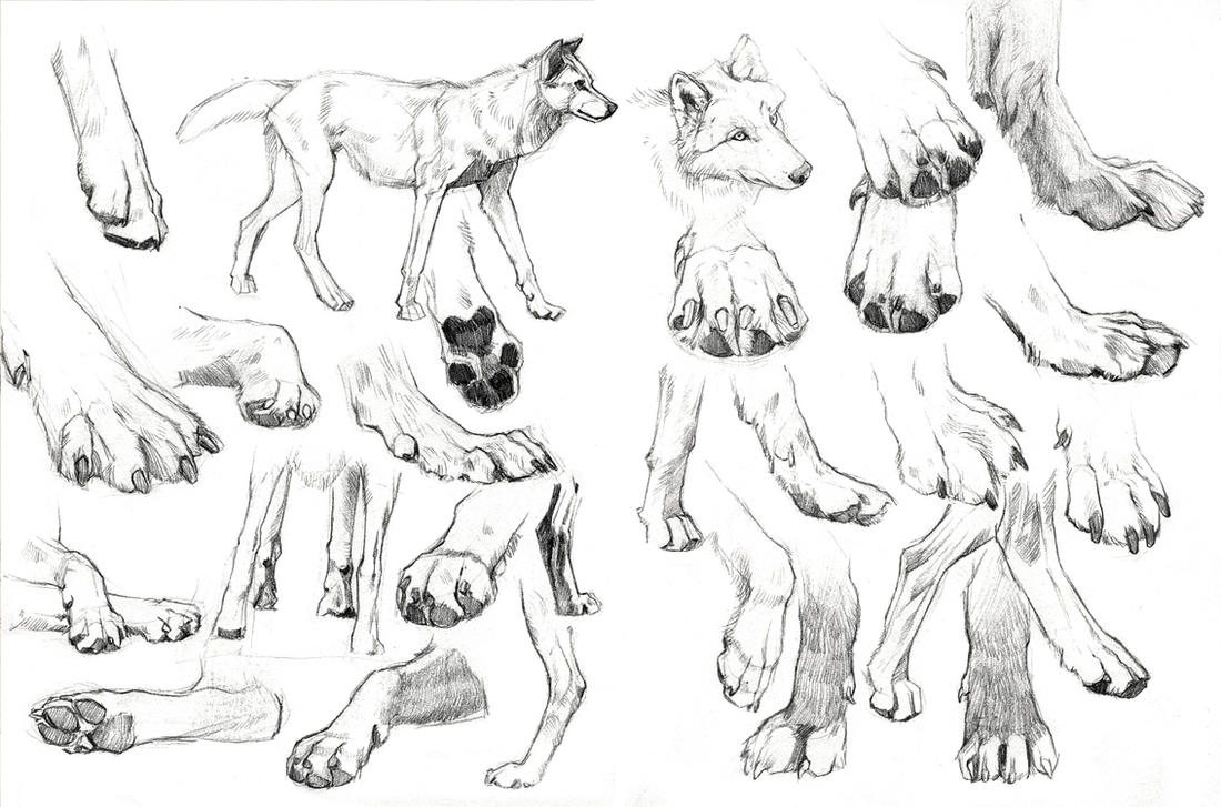 Paws frenzy by wolf-minori on DeviantArt