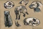 Mongoose - 100animals100days