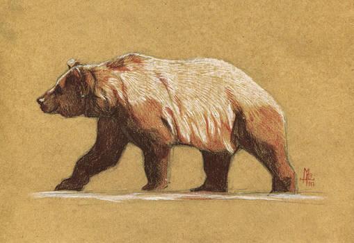 Bear - 100animals100days