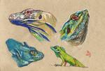 Lizard study