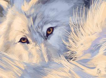 Wolf photostudy I by wolf-minori