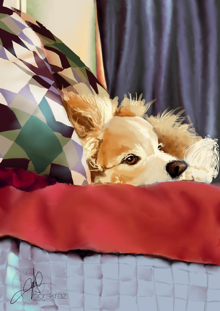 Dog on Bed by horskraz