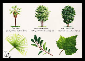 Tree Study - Broad Leaved 14