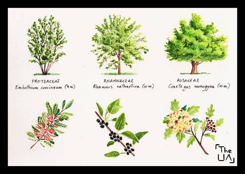 Tree Study - Broad Leaved 15