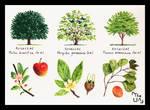 Tree Study - Broad Leaved 16