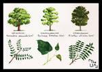 Tree Study - Broad Leaved 20