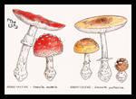 Dangerous Mushrooms 1