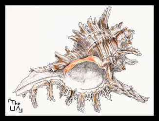 Chicoreus Ramosus (Inktober, Day 5) by TheUnconfidentArtist