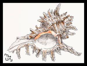 Chicoreus Ramosus (Inktober, Day 5)