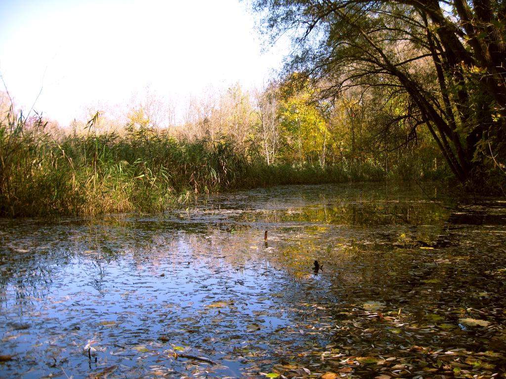 Swamp by Warren286